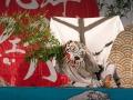 白い虎は只越