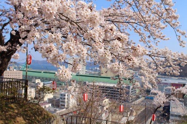 薬師公園桜